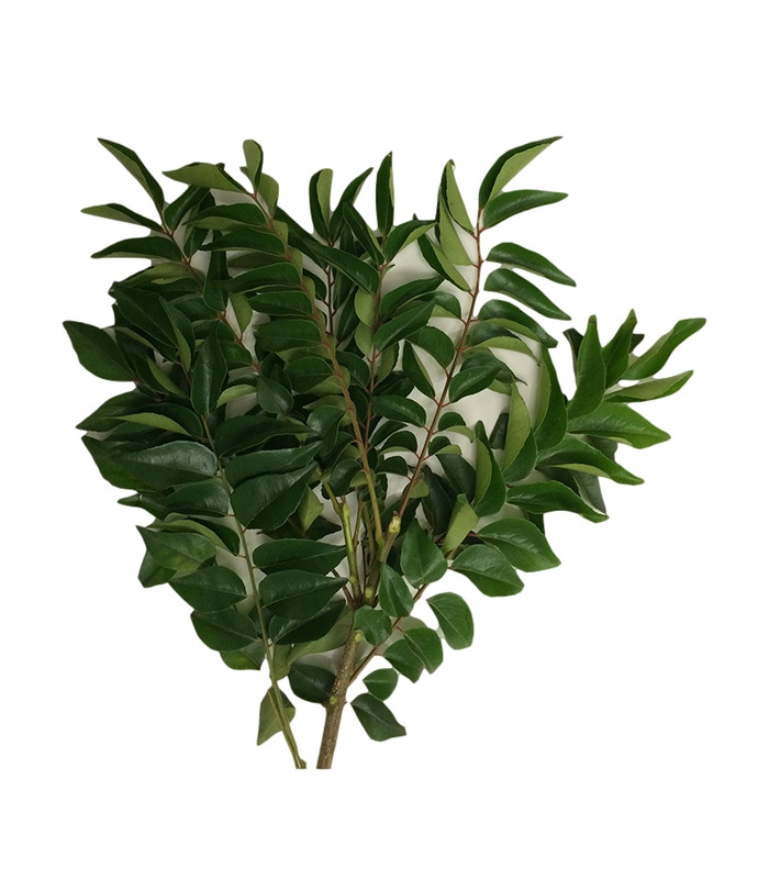 Fresh Curry leaves -50g